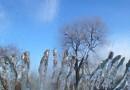 Botanic ice garden